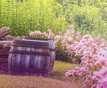 Verschönerung für den Garten und gleichzeitig oraktisch: Die Regentonne