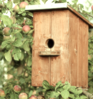 vogelhaus vergleich