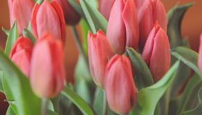 Blumenstrauß Test