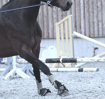 gamaschen am pferd
