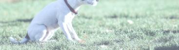 Hundehalsband im Vergleich