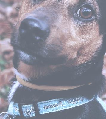 Gassigehen mit dem passenden Hundehalsband