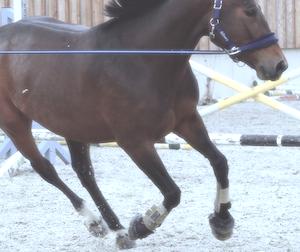 gamaschen im pferdesport