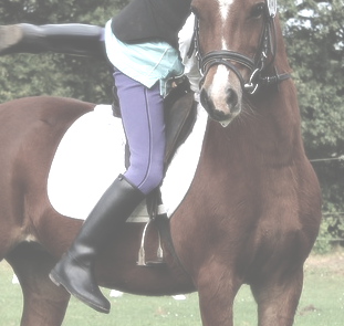 Reitstiefel für Anfänger und Fortgeschrittene im Einsatz auf dem Pferd