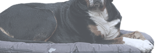 Hundekissen Vergleich