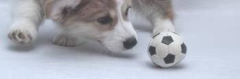 Hundeball für kleine Hund und anderes Hundespielzeug im Vergleich