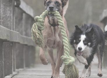 Hundespielzeug Vergleich