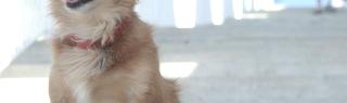 hundetreppe test