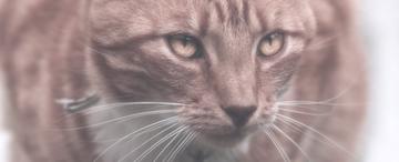 Der Katzenschreck vetreibt im Garten unliebsame Katzen. Katzenschreck im Vergleich