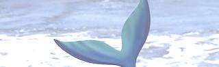 die meerjungfrauenflosse test