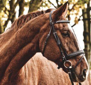 Trense Pferd Test