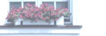 Balkonkästen Test