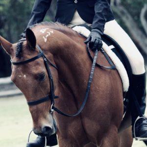 op versicherung pferd