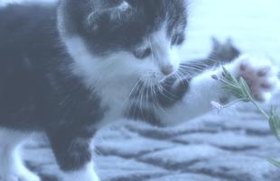 Tierhalterhaftpflichtversicherung Kosten sparen