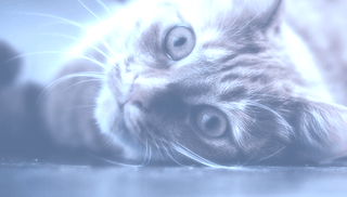 Tierhalterhaftpflichtversicherung für Tierhalter