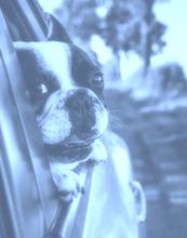 Tierhalterhaftpflichtversicherung kostenlos vergleichen