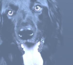 Tierhalterhaftpflichtversicherung wechseln