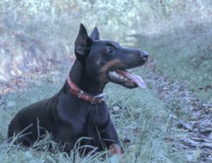hundeversicherung test