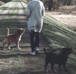 hundehaftpflichtversicherung test