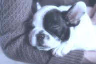 beste Hundehaftpflichtversicherung finden