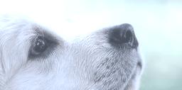 welche Hundehaftpflichtversicherung passt