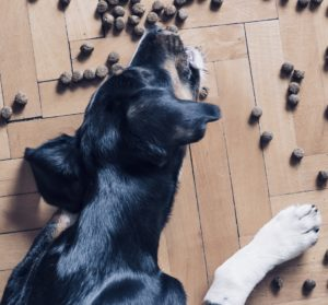 Wolfsblut-Hundefutter test